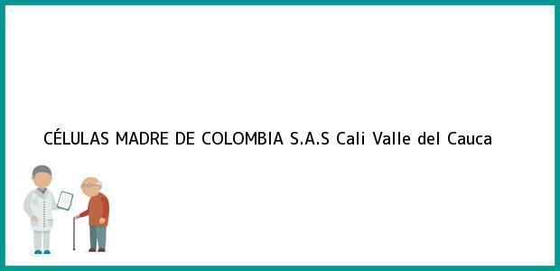 Teléfono, Dirección y otros datos de contacto para CÉLULAS MADRE DE COLOMBIA S.A.S, Cali, Valle del Cauca, Colombia