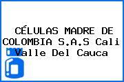 CÉLULAS MADRE DE COLOMBIA S.A.S Cali Valle Del Cauca